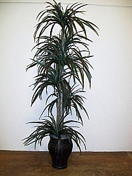 YUCCA ON WOOD/TALL SQUARE PLANTER